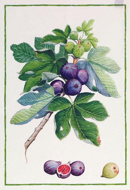 Figs Linen Tea Towel 50x70cm