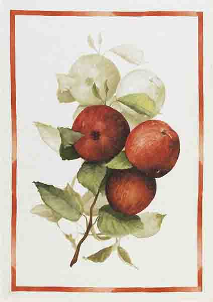 Apples Linen Tea Towel 50x70cm
